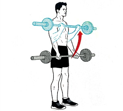 barbell-bicep-curls